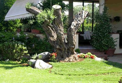 Giardini e aiuole types naldini piante for Foto giardini e aiuole